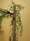 arbres mecaniques (4)