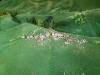 Maquette Alpage (5)