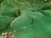 Maquette Alpage (7)