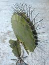 plante geante carnivore (11)