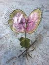plante geante carnivore (12)