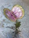 plante geante carnivore (13)