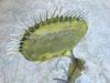 plante geante carnivore (9)