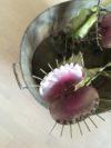 plantes carnivores (10)