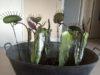 plantes carnivores (15)