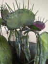 plantes carnivores (16)